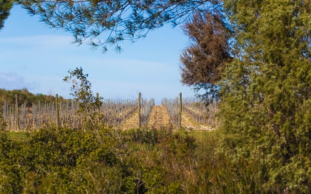 Acquisition du Domaine de Silène pour signer un grand vin du Languedoc