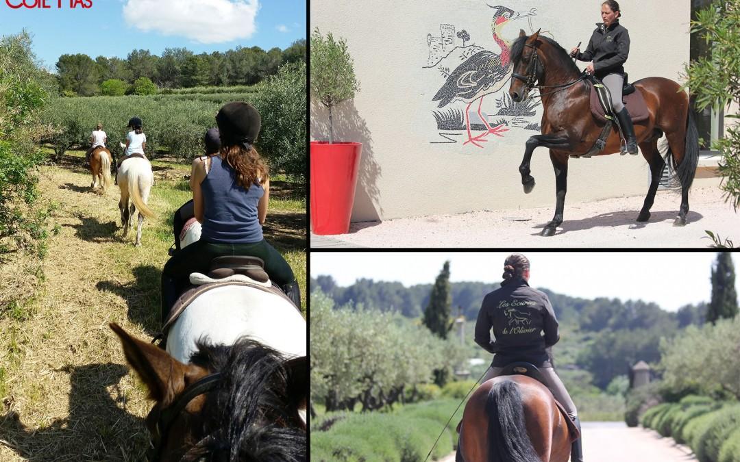 Lancement d'une nouvelle activité à Côté Mas, les balades à cheval dans les vignes