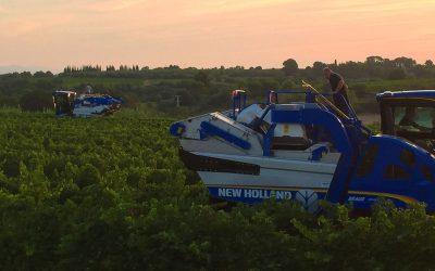Vendanges 2018 au lever du soleil en terroir de Languedoc