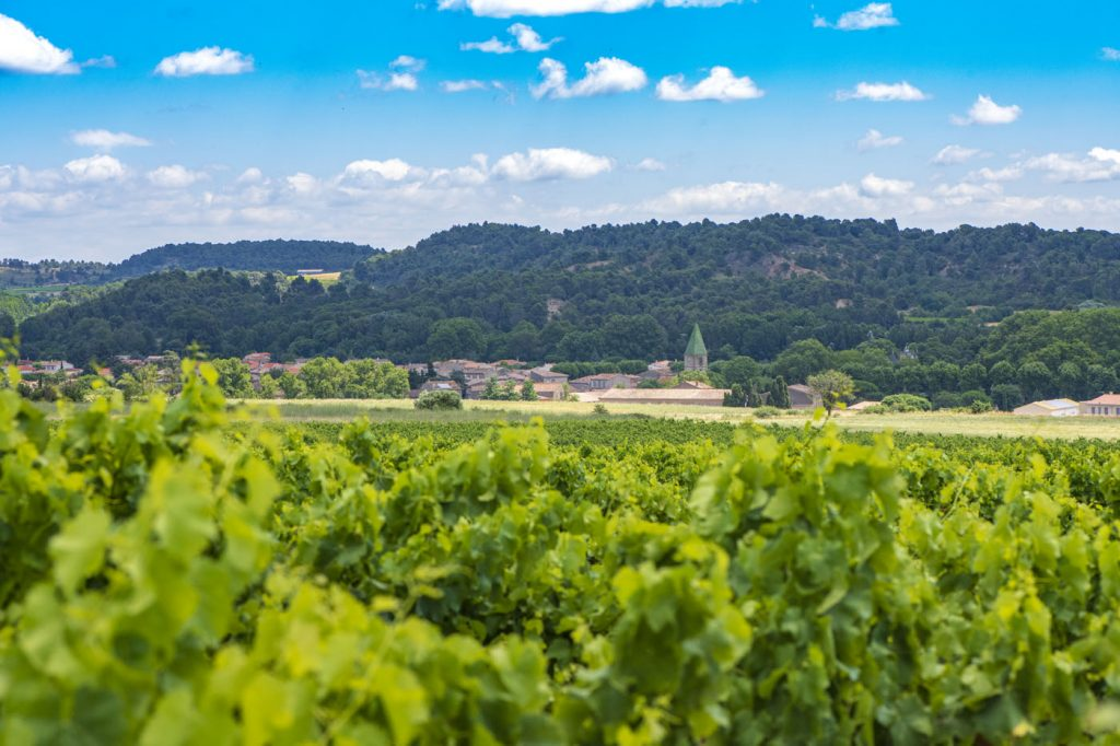 the red vineyard analysis